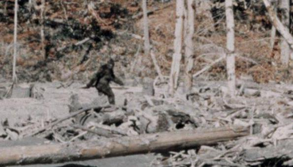 A still from the famous 1967 Patterson-Gimlin film that claimed to have captured the ape-like bigfoot.