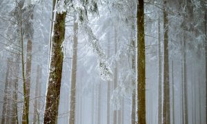 American Renewal: Always Winter, Never Christmas