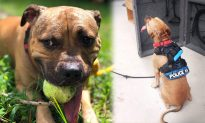 27 Injured Pups Found in Man's Backyard for Dog Fighting, Now He Faces 135 Years in Jail