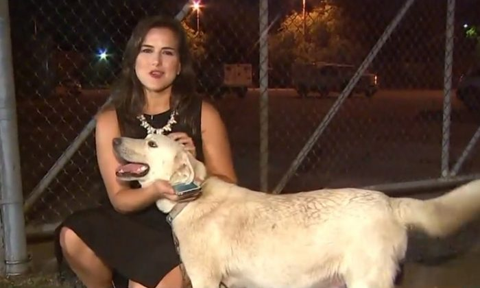 KHOU11 News reporter Janelle Bludau with a dog chained to the fence of the Harris County Animal Shelter in Houston, Texas. (Facebook Video Screenshot | KHOU 11 News)