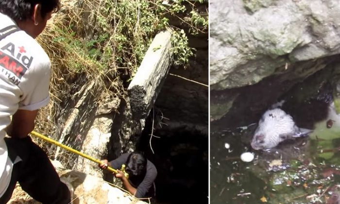 The rescue team of Animal Aid Unlimited, India, pulls an adorable baby goat out from the bottom of an underground well. (YouTube Screenshot | Animal Aid Unlimited, India)