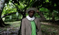 Venezuela's Socialist Government Now Seizing Cocoa as 'Outstanding' Tax Payments