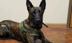 Missing Georgia K9 Found Injured but Alive