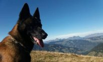 Dog Rescues Boy, 12, Buried by French Alps Avalanche for an Hour