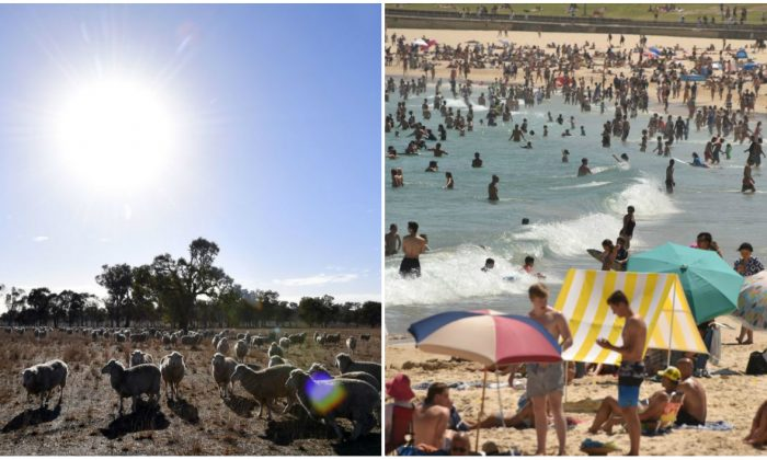 (L) Sheep grazing on a dry paddock in the drought-hit area of Duri in New South Wales on Aug. 7, 2018. (R) Sunbathers are seen on Bondi Beach as temperatures soar in Sydney on December 28, 2018. (Saeed Khan/Peter Parks/AFP/Getty Images)