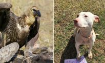 Vultures wait for the right moment to attack near-death pup but neighbors thwart their plan