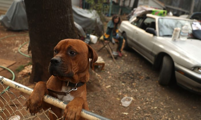A dog in California. (Justin Sullivan/Getty Images)