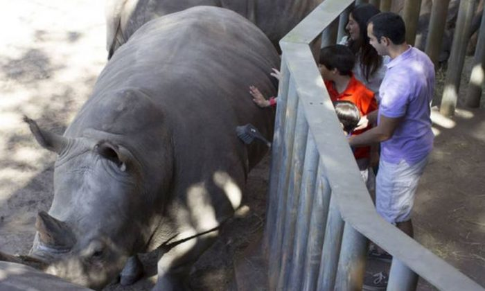 A rhino at the Brevard Zoo in a file photo. (Brevard Zoo)