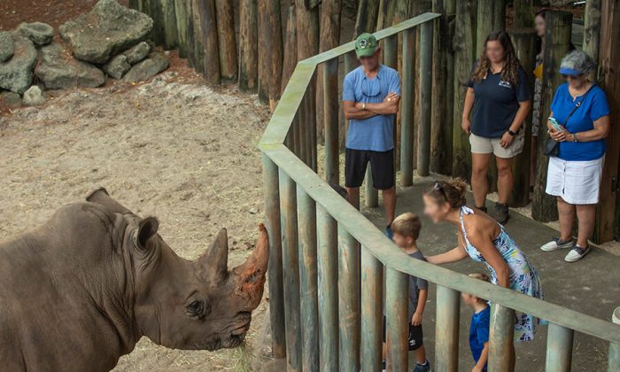 A rhinoceros at the Brevard Zoo in Florida in a file photo. (Brevard Zoo)