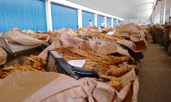 Tobacco at one of Zimbabwe's tobacco auction floors in Harare, Zimbabwe. (Kenneth Matimaire)