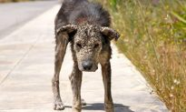 Stray Dog Turning to Stone on the Streets Gets Saved From Certain Doom by Kind Woman