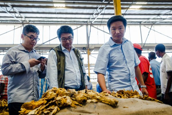 "Chinese tobacco merchants inspect a bale of the ""golden leaf"" during the official opening of the tobacco selling season at the Tobacco Sales Floors in Harare March 21 2018. (Jekesai Njikizana/AFP/Getty Images)"