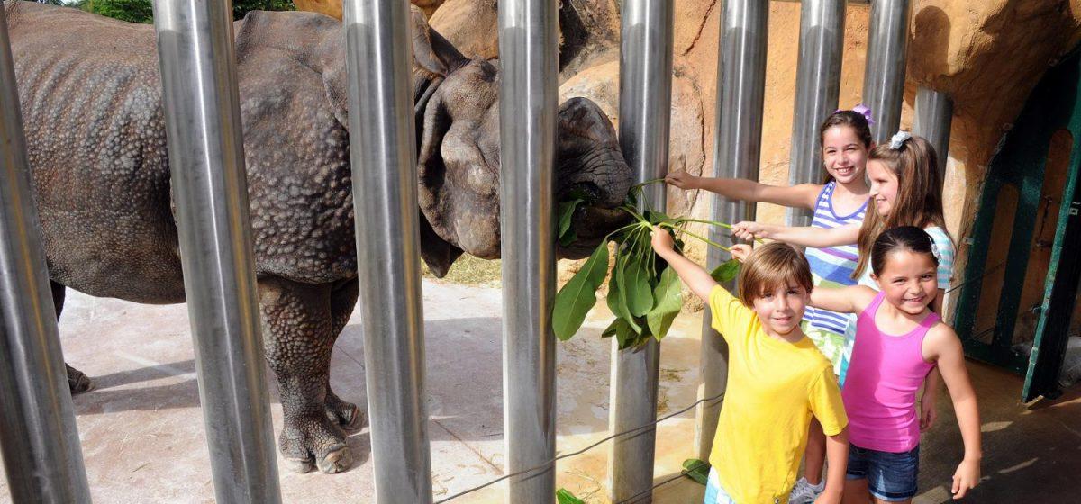 rhino miami zoo