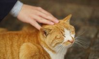 Teenager Treated for Schizophrenia Had Catch-Scratch Disease