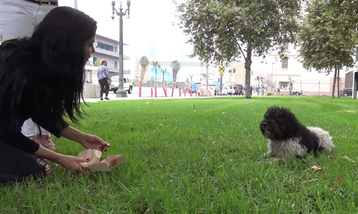 Maxwell, a shaggy, black-and-white-colored dog, was rescued by Hope for Paws from the streets of LA. (YouTube Screenshot | Hope For Paws - Official Rescue Channel)