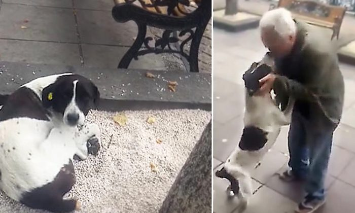 Elderly Georgio man lost his dog 3 years ago then one day gets a call and rushes to the spot to reunite with his dog, Jorge. (YouTube Screenshot | ViralHog)