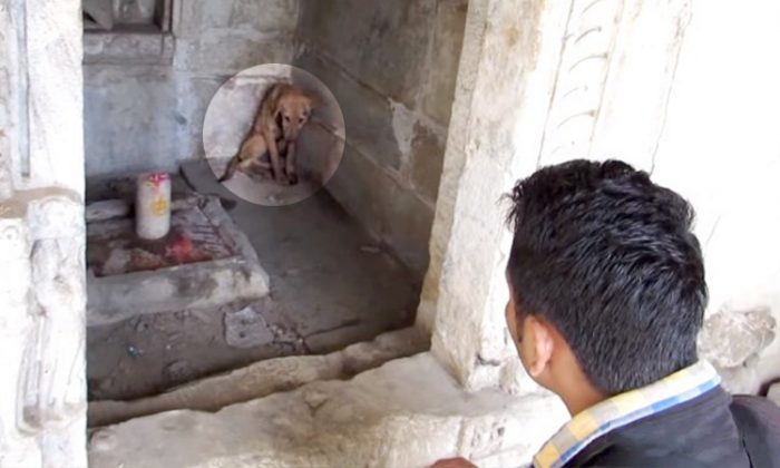 Animal Aid Unlimited rescues a dejected puppy named Punkin from a temple in India in May 2016. (YouTube Screenshot | Animal Aid Unlimited, India)