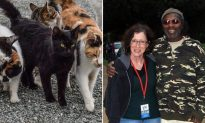 Elderly Man Who Was Evicted With 20 Stray Cats Has True Identity Revealed By Reporters