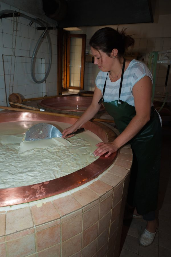 Woman stirs curds for Asiago cheese in traditional copper vat