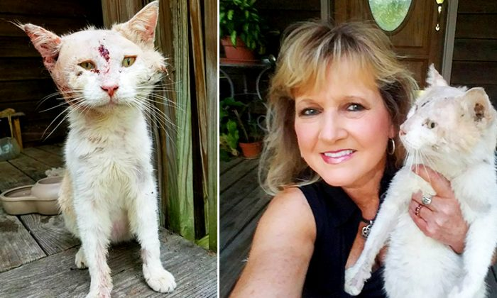 Pam Latham from South Carolina finds a severely injured cat lying at her carport, then takes him under her care. (Instagram | cutestlittlenudist)