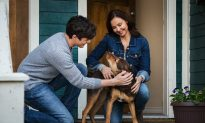 Film Review: 'A Dog's Way Home': Toad's Wild Ride