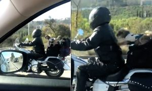 Biker Dog's Daring Act Leaves People on Freeway Asking for More!