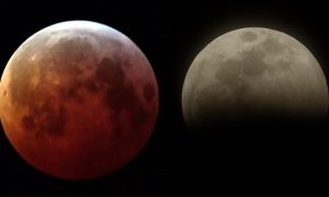 US Eclipse Watchers Howl at Blood Wolf Moon but Bitter Cold Cancels Other Festivities