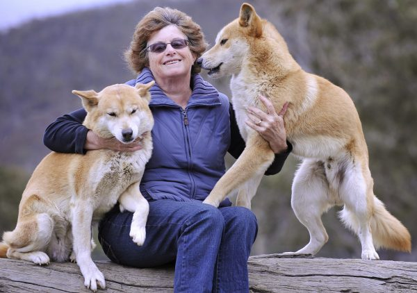 woman with dingos