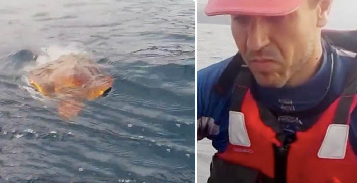 (Left) A sea turtle trapped in a plastic net approaches (Right) two kayakers for help. Once they help him, their rescue mission touches people on the internet. (Facebook Video Screenshot | The Weather Channel)