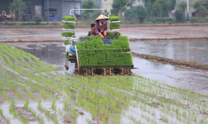 Farmers transplant rice seedlings with a rice transplanter at a paddy field in Hengyang, Hunan Province, China on April 20, 2018. (Reuters)