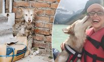 Scared Dog Rescued From China Slaughterhouse Finds a New Home in the US