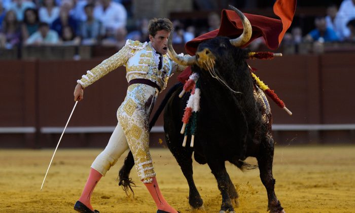 Spanish bullfighter Alfonso Cadaval performs a pass during a bullfight at the Real Maestranza bullring in Seville on Sept. 30, 2018. (Cristina Quicler/AFP/Getty Images)