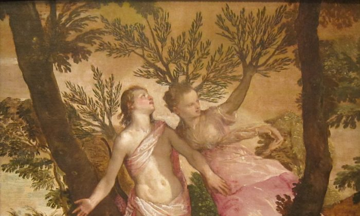 """At the moment Daphne sends a prayer, she is transformed. """"Apollo and Daphne,"""" between circa 1560 and circa 1565, by Paolo Veronese. San Diego Museum of Art. (Public Domain)"""