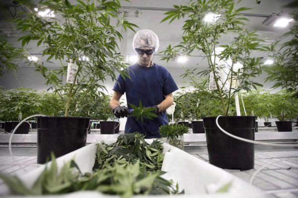Workers produce medical marijuana at Canopy Growth Corporation's Tweed facility in Smiths Falls, Ont., on Feb. 12, 2018. (THE CANADIAN PRESS/Sean Kilpatrick)