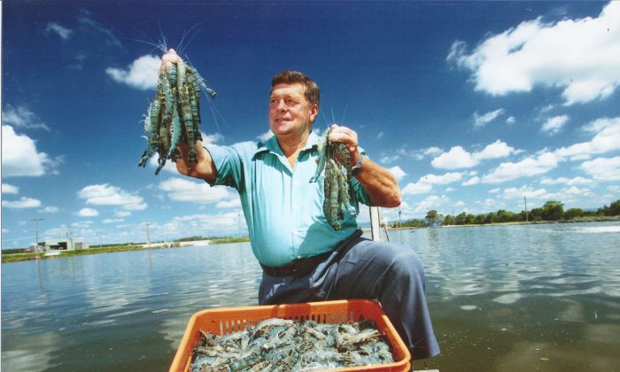 Gold Coast Marine Aquaculture founder Noel Herbst with his prawn farm product in Woongoolba, Queensland, Australia, in March 2015. (Courtesy of Australian Prawn Farmers Association)