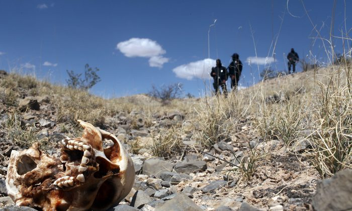 Mexican police stand near a skull discovered in a large grave in the desert of victims of recent drug violence in the county of Juarez, Mexico on March 19, 2010. (Spencer Platt/Getty Images)