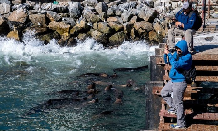 Men try to fish as sea lions gather in front, at San Antonio port, some 140 km west of Santiago, Chile, on Nov. 23, 2018. (Martin Bernetti/AFP/Getty Images)