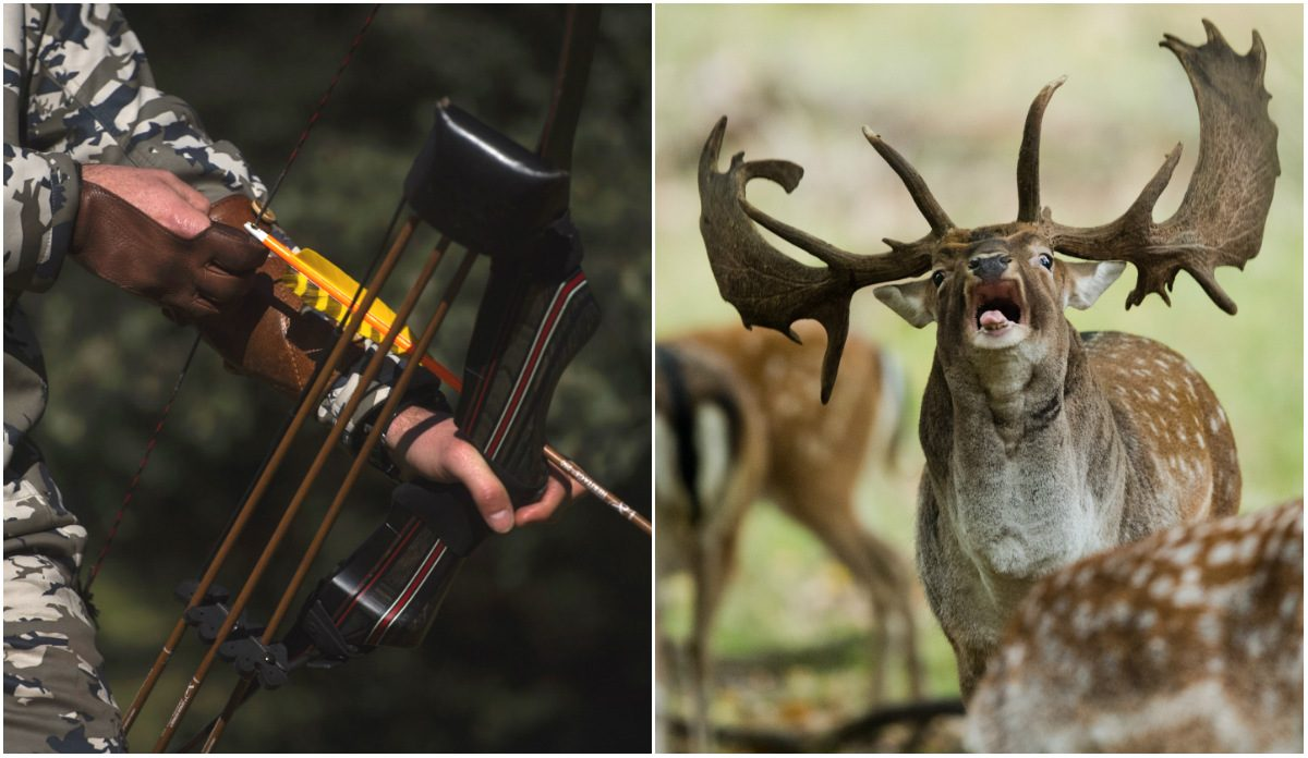 Bow Hunter and Deer