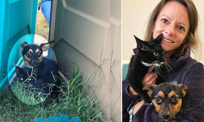 (L) Gomez and Morticia ; (R) Turkan Ertugrul (L: Facebook   Angela Davis Ward, R: Facebook   Saver of Souls Pet Rescue)