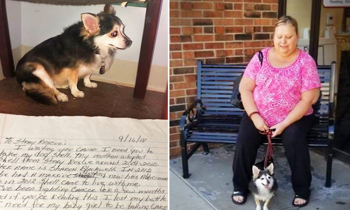 Sharon Blackwell adopted Shell, a puppy, 9 years ago, but as she and her daughter both fell sick, she wrote a petition for Shell to be adopted. Soon, the puppy found a home.  (Facebook | Stray Rescue of St. Louis)