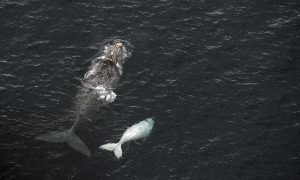 Whale Tries to 'Eat' Tour Operator in South Africa, Photos Show