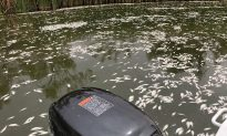 Darling Gets $70 Million to Prevent Fish Deaths