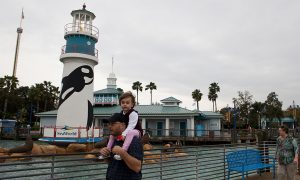 30-Year-Old SeaWorld Orca Dies at a Young Age: 'Not Normal'