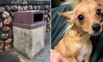 Freezing, Hungry Dog Dumped in Bin Near Highway Gets Rescued, Now Awaits Forever Home