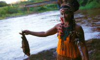 Arrests in Brazil Dam Disaster, Dead Fish Wash up Downstream