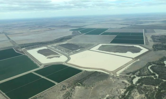 An aerial photo of cotton farms shows they have ample water in Bullamon Plains, Australia, on Jan. 30, 2019. (Australian Senator Rex Patrick/Facebook)