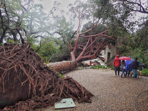 Southern California storm tree uprooted