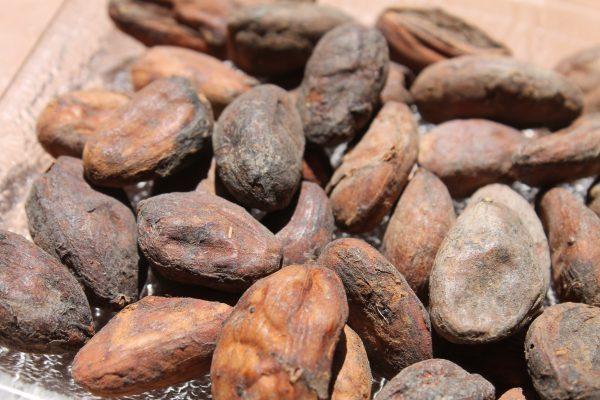 1-Cacao beans, F.Segan