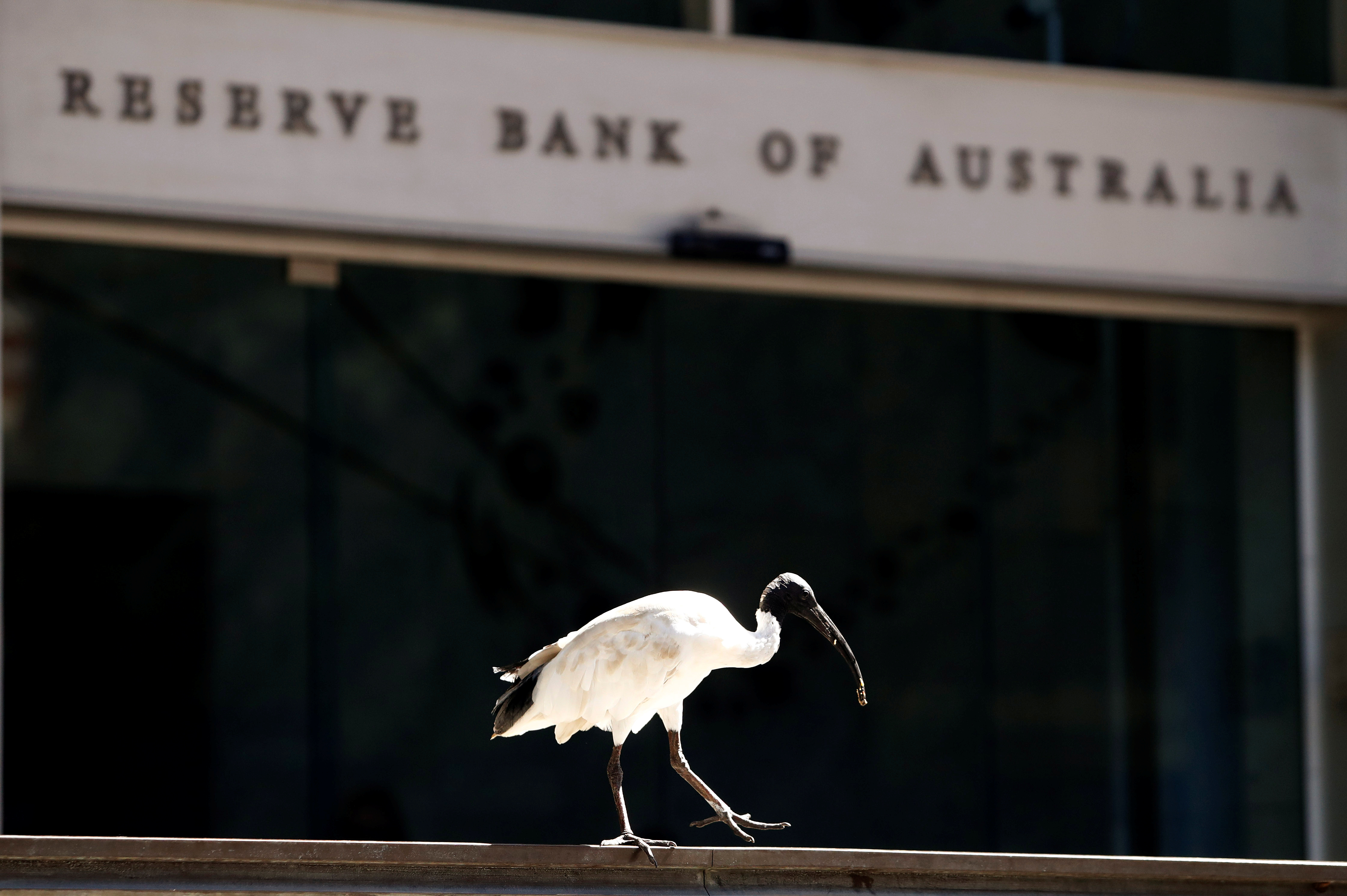 An ibis bird perches next to the Reserve Bank of Australia headquarters in central Sydney, Australia