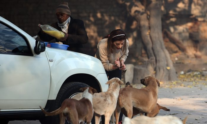 In this file image, a woman feeds street dogs in a parking area in New Delhi on Dec. 27, 2017. (Prakash Singh/Getty Images)